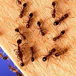 Niet vliegende insecten bestrijden