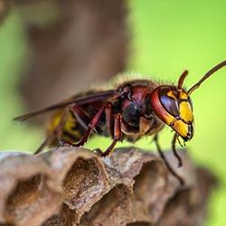 Vliegende insecten bestrjden